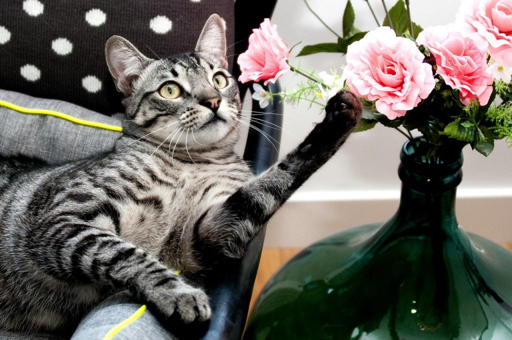Половая принадлежность как критерий при выборе кошки