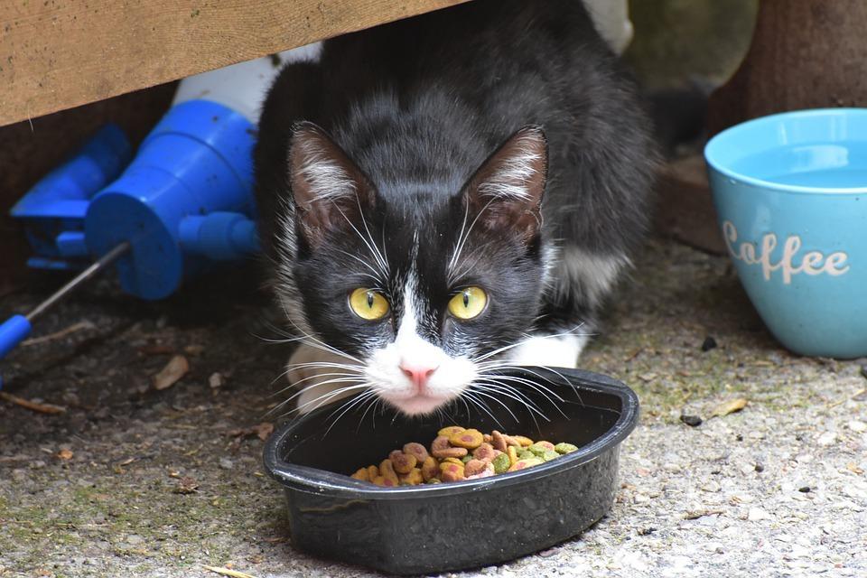 Кошка не ест сухой корм из-за грязной миски