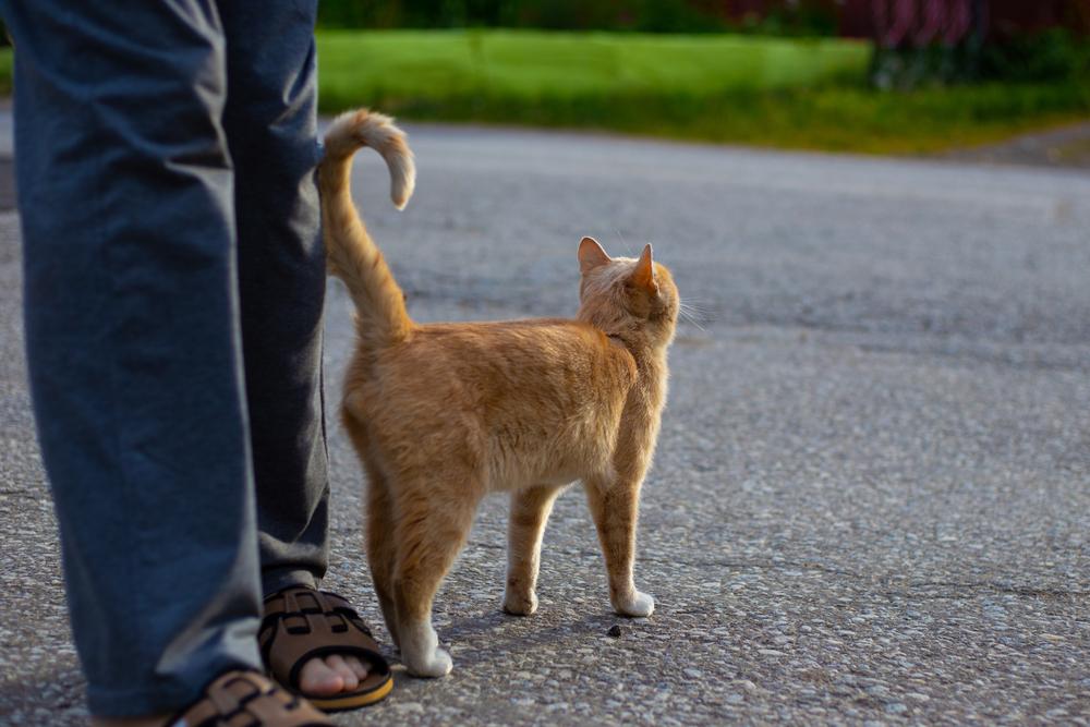Кот трясет хвостом при общении