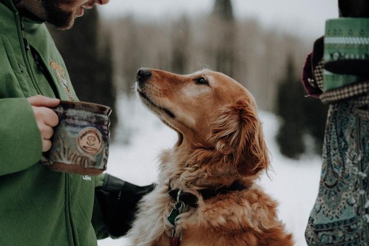 Уход и диета при отравлении у собаки