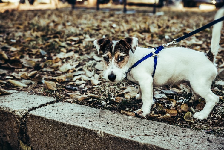 Психологические причины дрожи задних лап у собак