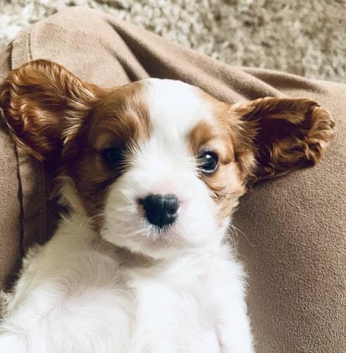 Диагностика поноса у щенков
