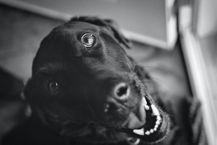 у собаки пахнет изо рта из-за неверного ухода за пастью