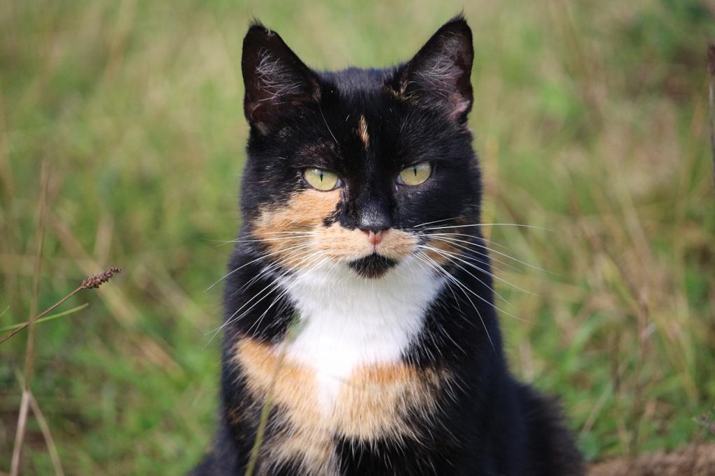 Отличаются ли трехцветные коты или кошки от собратьев с другим окрасом?