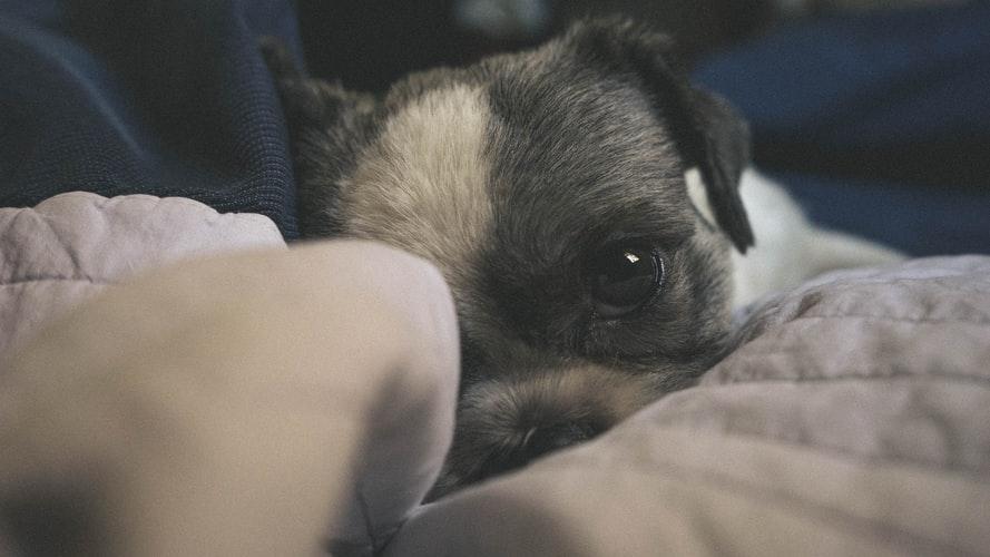 Причины глазных болезней у собак