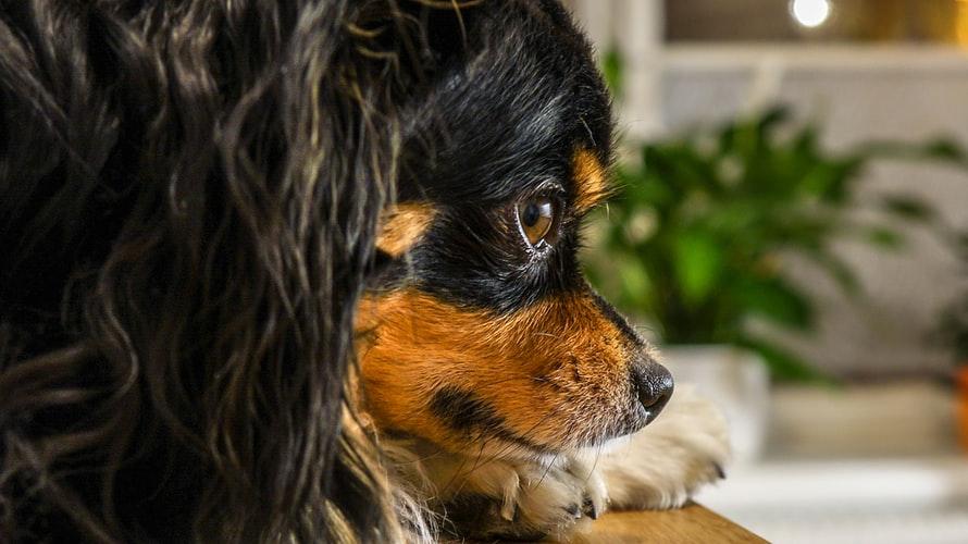 кровь в кале у собаки из-за болезни пищеварительного тракта