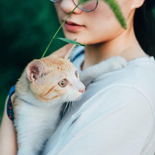 Почему кошки мурлыкают и топчут лапками