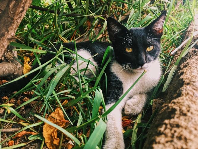 как вырастить траву для кошек дома