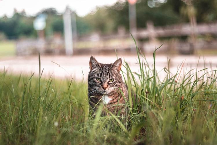 опасная трава для кошек