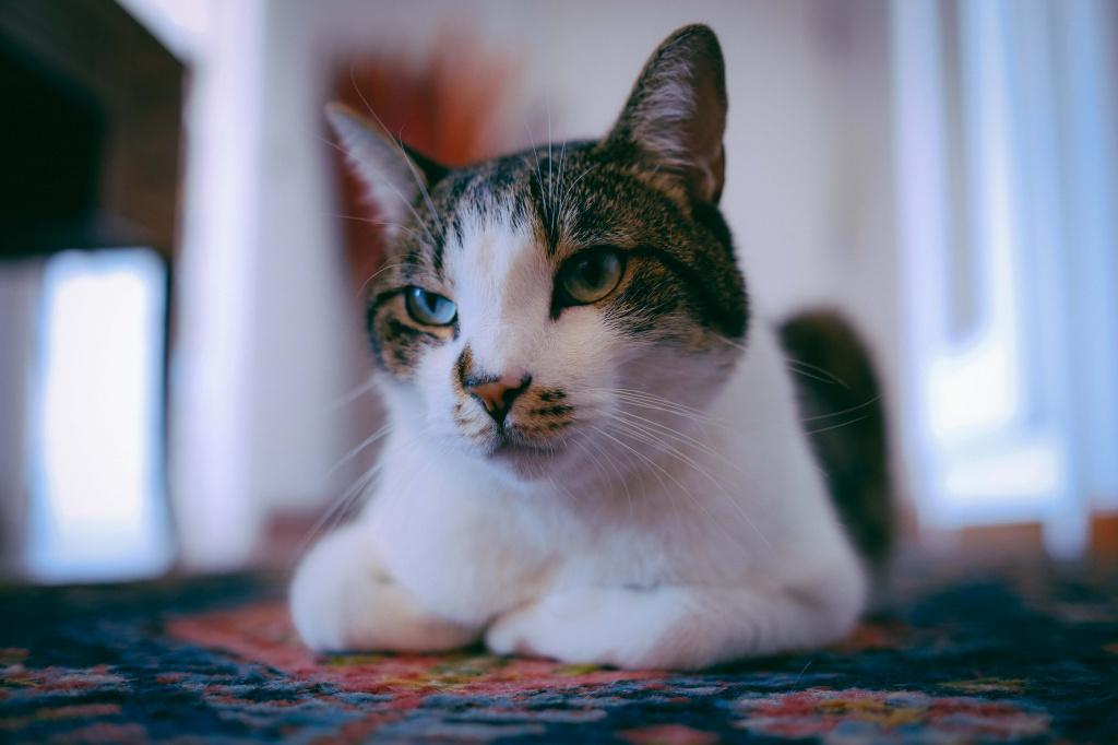 Доставка кошки домой после стерилизации