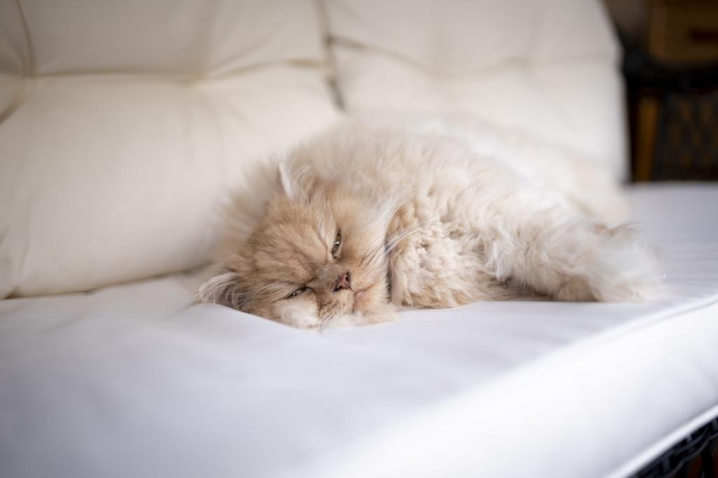 Почему кот храпит и сопит во сне