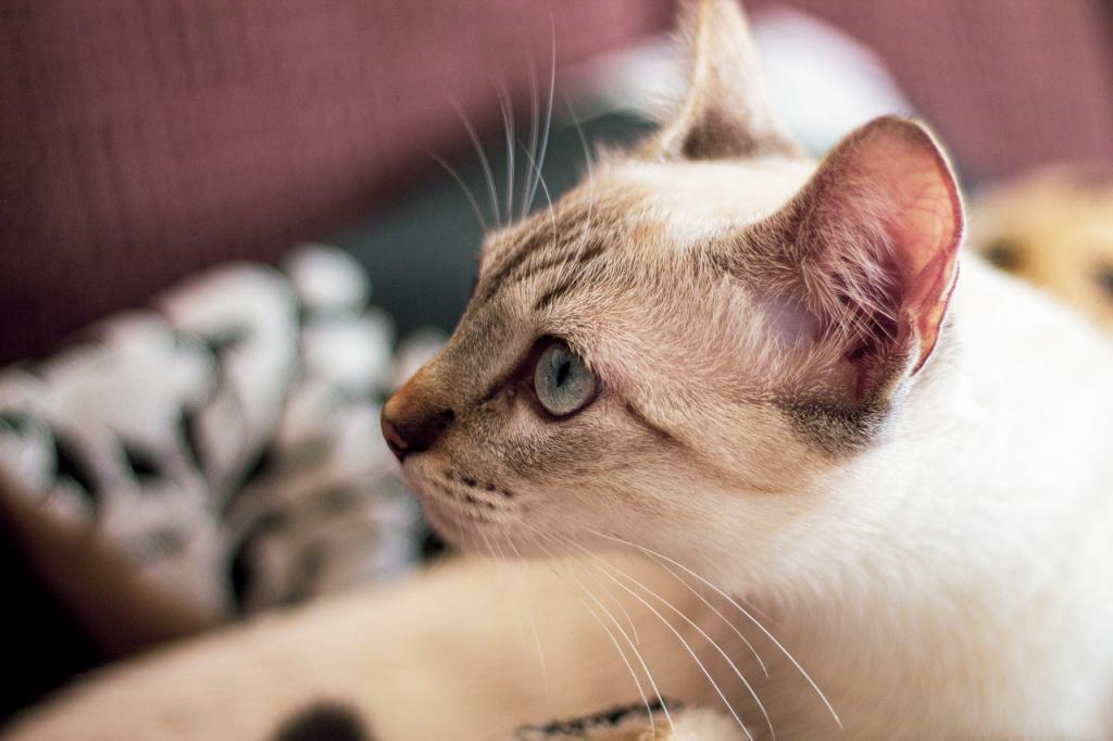 Основные критерии выбора кошки