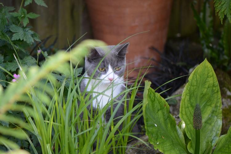 5 версий, почему кошки едят траву