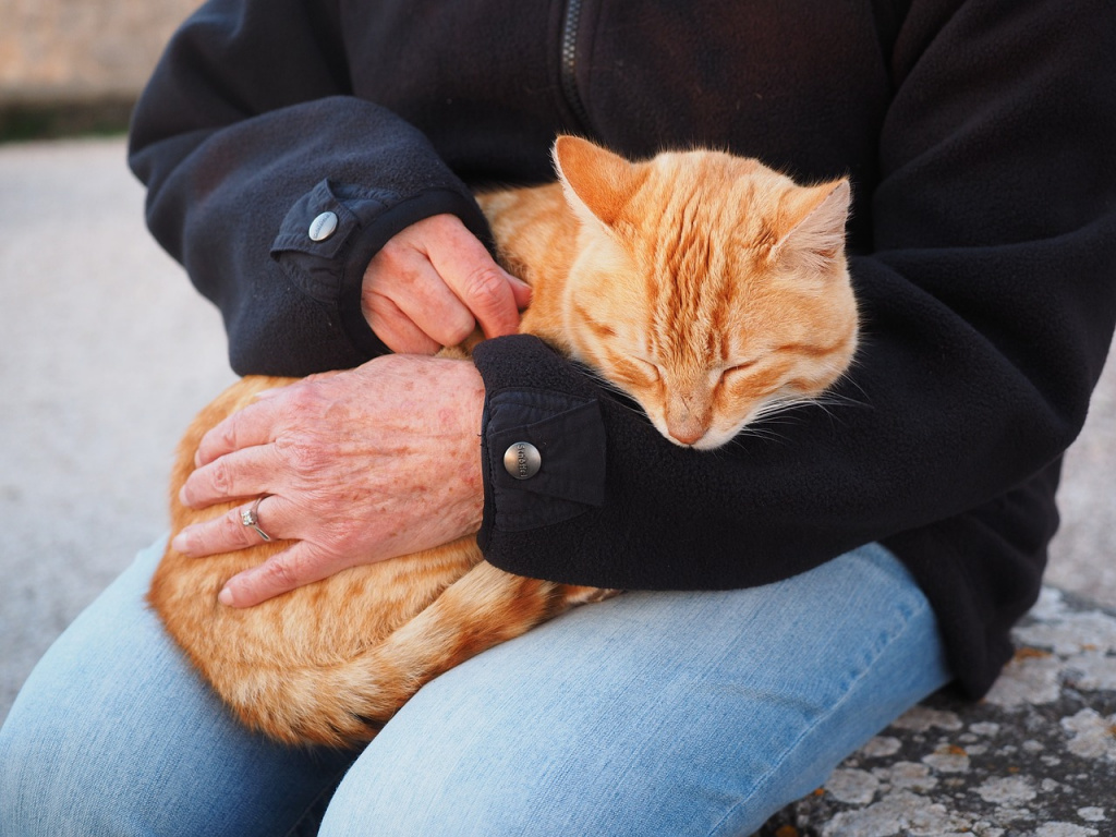 Все ли кошки любят, когда их гладят?
