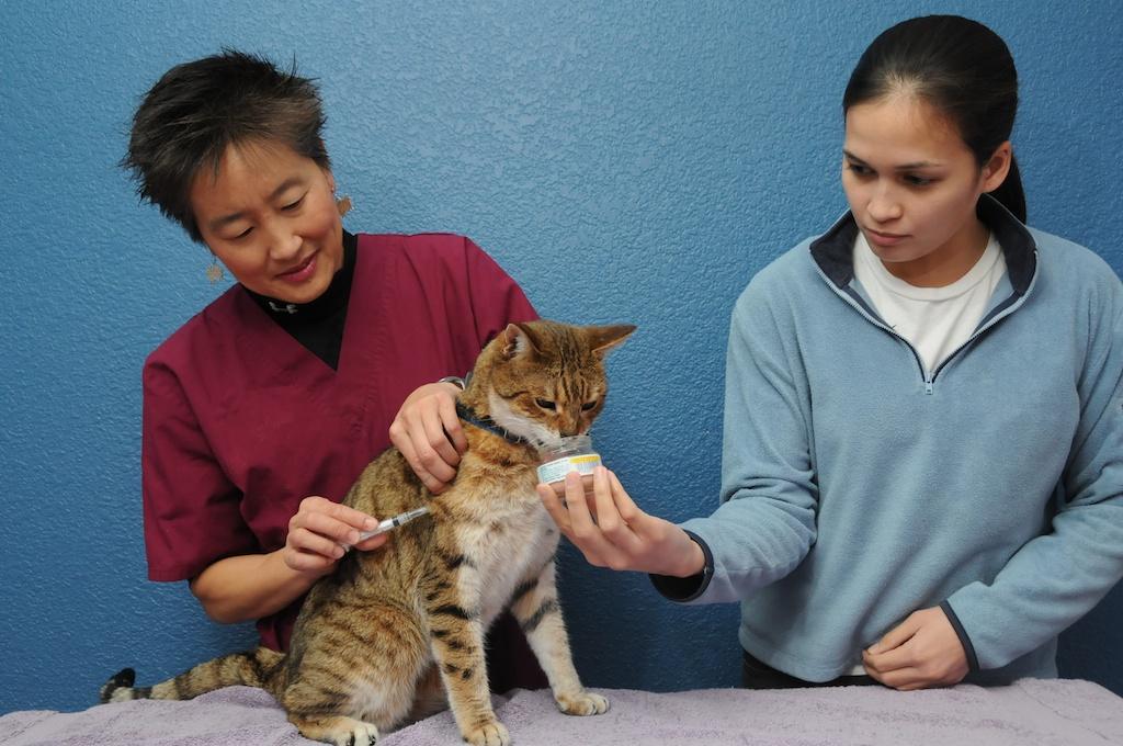 Медикаменты против блох у кошки