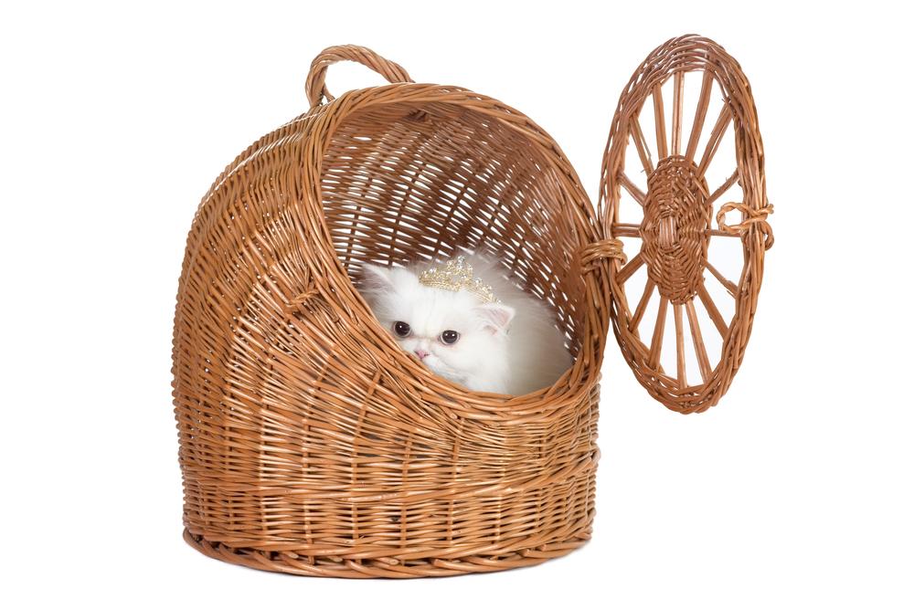 Какая переноска для кошек лучше: плетеная корзина