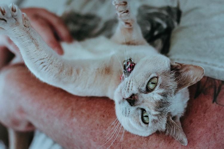 Чего нельзя делать, отучая котенка царапаться