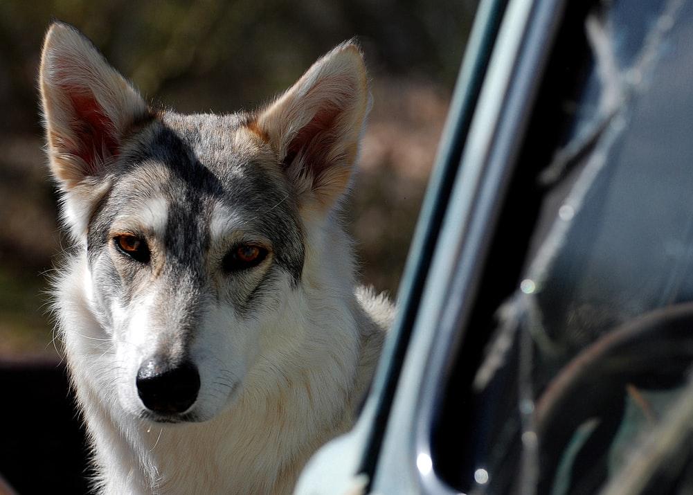 как предупредить агрессивное поведение собаки