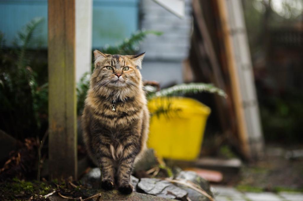 каким котам ошейник противопоказан