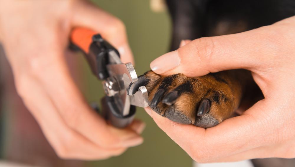Как подстричь когти собаке у грумера