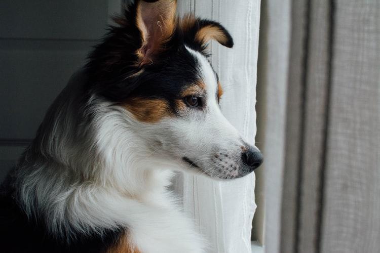 Частые ошибки при приучении собак к одиночеству