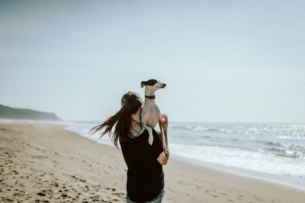 отучить собаку прыгать на людей с помощью кинолога