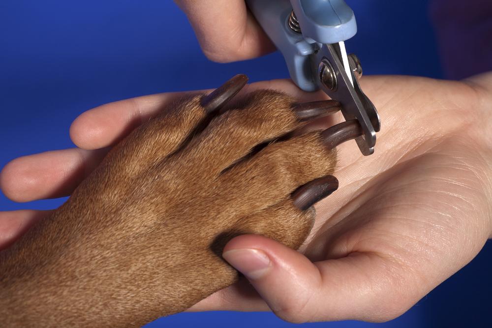 Какие когти бывают у собак