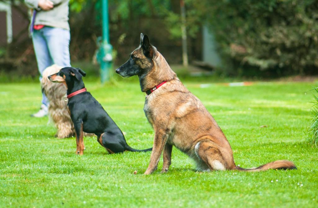 как научить собаку командам на курсах ЗКС