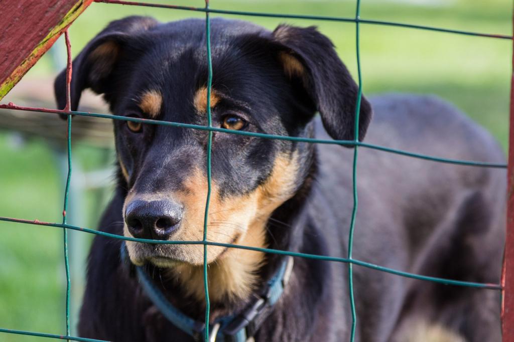 Стоит ли вообще брать собаку из приюта?
