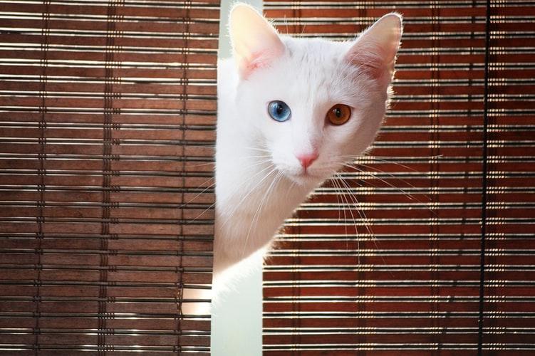 Метит ли территорию кастрированный кот