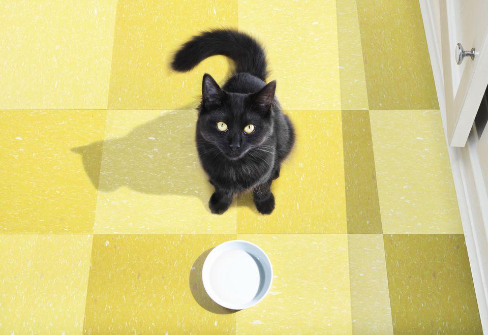 Витамины и микроэлементы при натуральном кормлении кошек