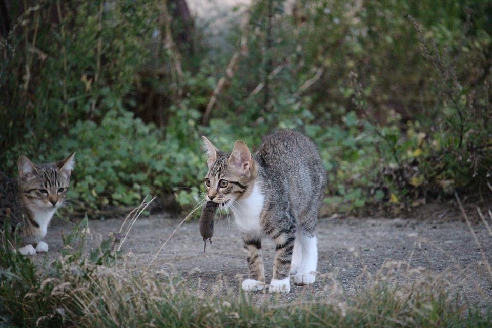 Правила кормления котенка в 3-4 месяца