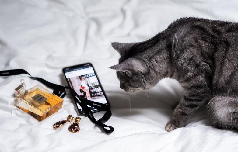 Использовать отталкивающие запахи, чтобы кот не грыз провода