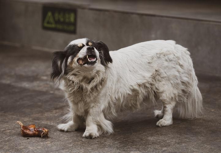 Чем собака может подавиться