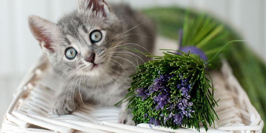 Специальные средства для обработки помещений при блохах у кошки