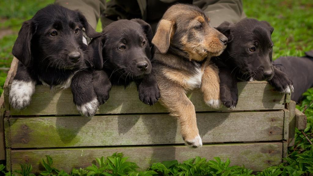 Кого лучше взять из приюта: щенка или взрослую собаку?