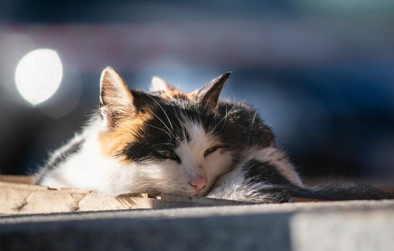 как мурлыкают кошки при положительных эмоциях