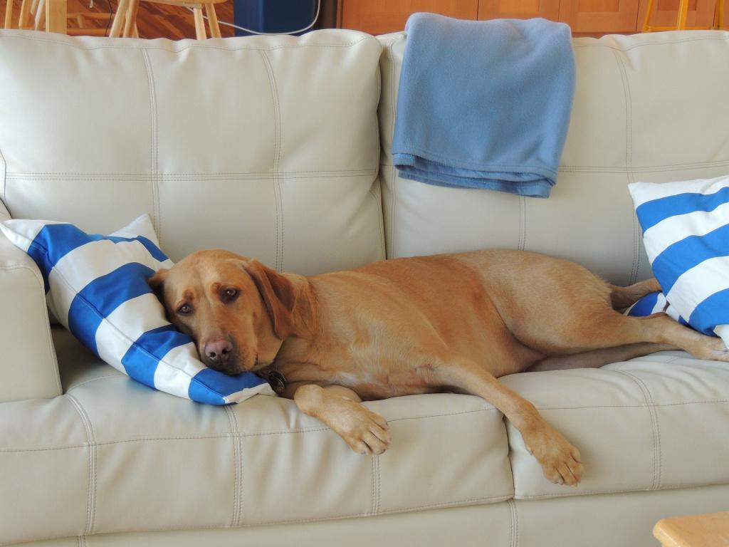 Как надолго можно оставить собаку одну дома