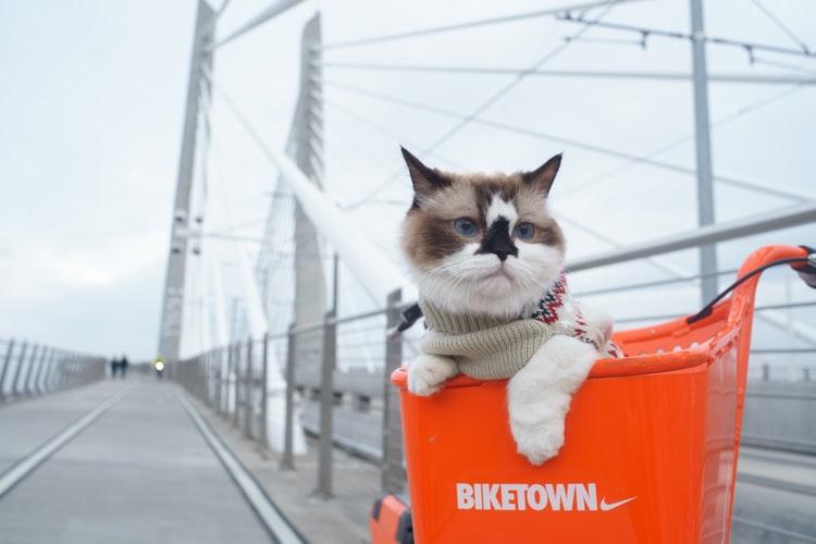 Можно ли перевозить кошек в поезде