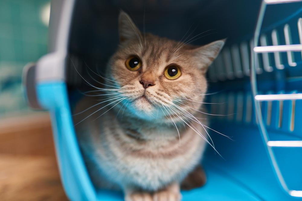 Какую переноску выбрать для перевозки кошки в поезде