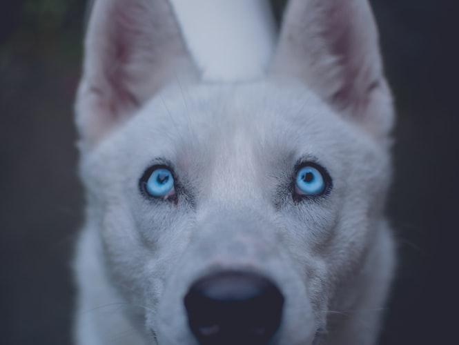 медикаментозное лечение мутных глаз у собаки