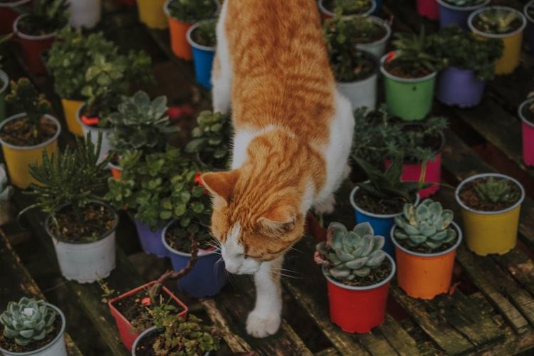 Что вызывает желание у кошки лазить в цветочные горшки