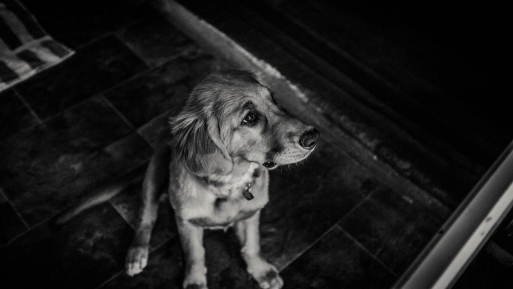 определение возраста собак разных пород