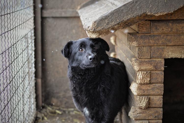 Чего нельзя делать, приучая собаку жить в будке
