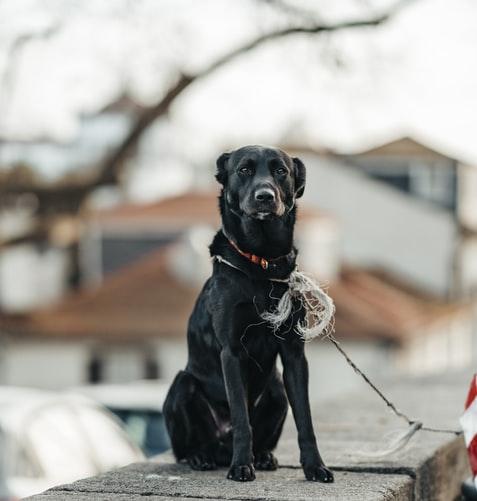 прививка от бешенства щенкам и собакам