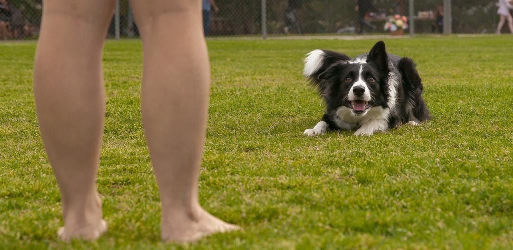как научить собаку командам: самостоятельно или с инструктором