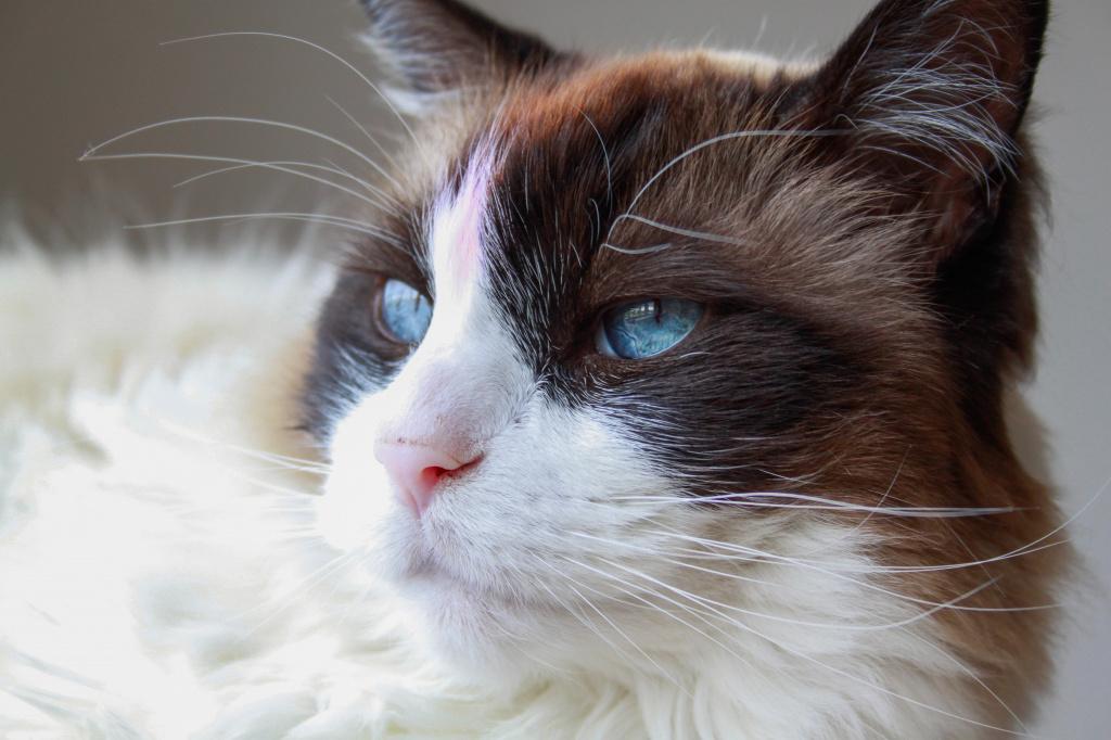 Место реабилитации для кошки после стерилизации