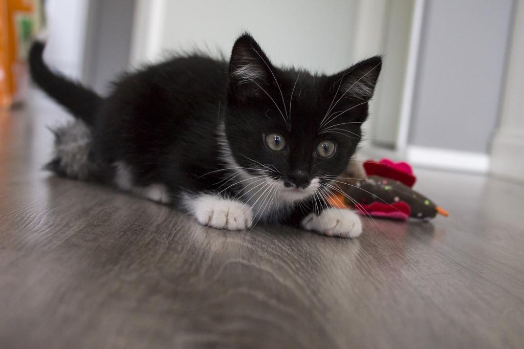 Как успокоить испугавшегося кота или котенка