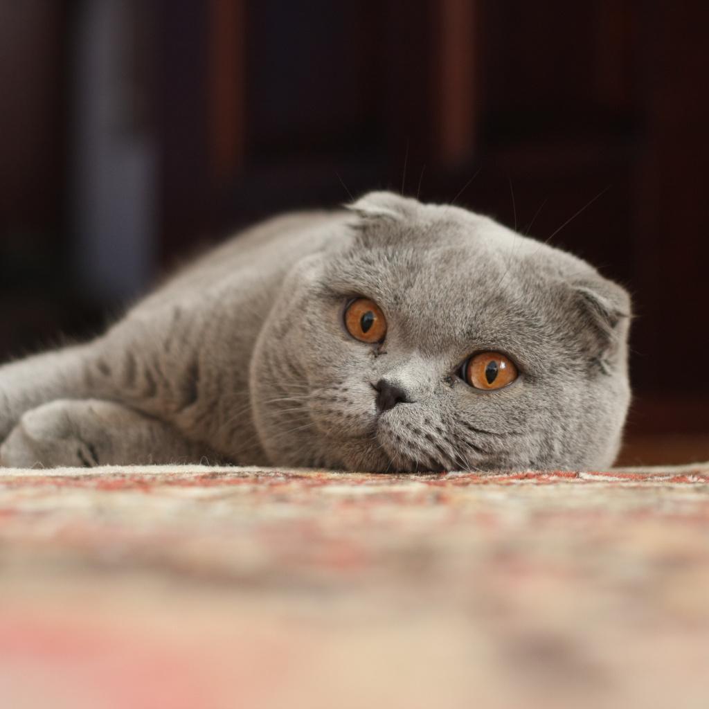 Хештеги для фото кошек