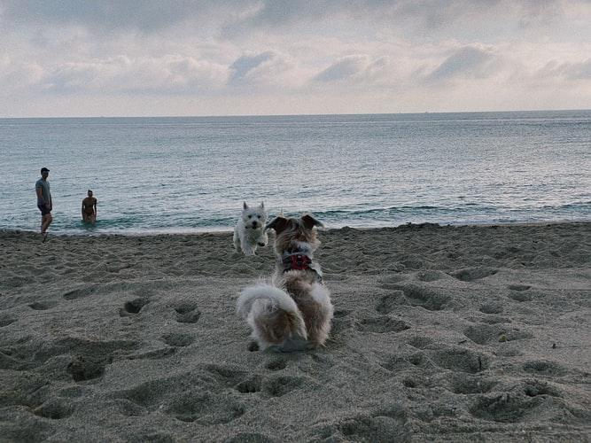 состояние собаки после прививки от бешенства